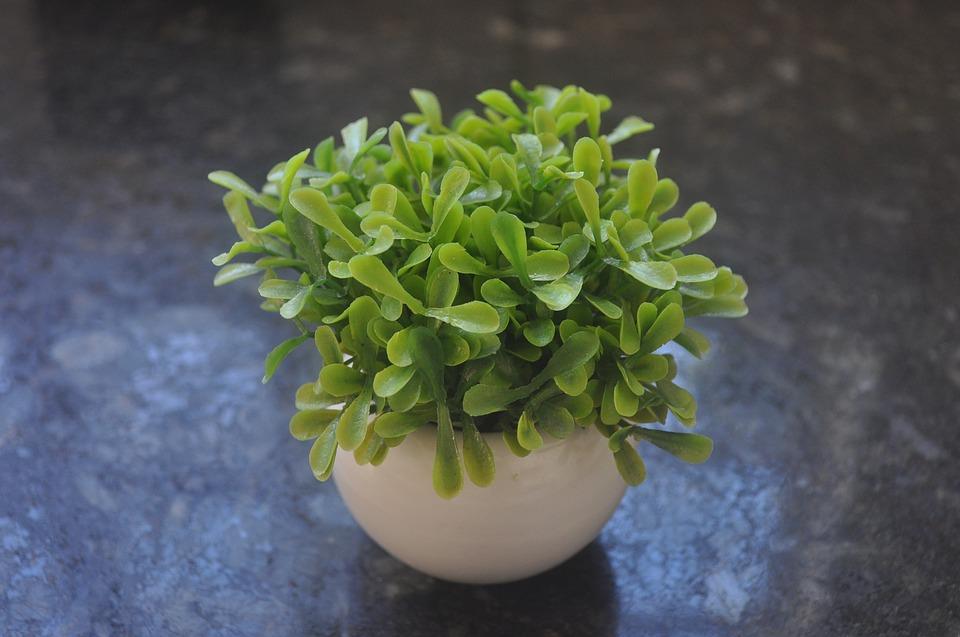 Künstliche Pflanzen oder Heimdekoration – Einige Ideen